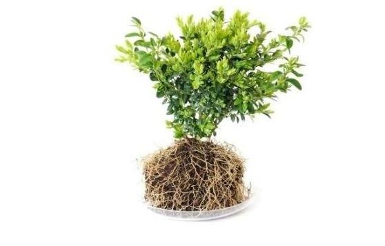 www.topiarygarden.co.uk