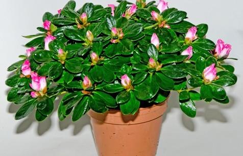 www.topfpflanzen-shop.de.jp