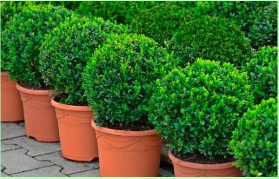 www.jardinerie-boncap.fr