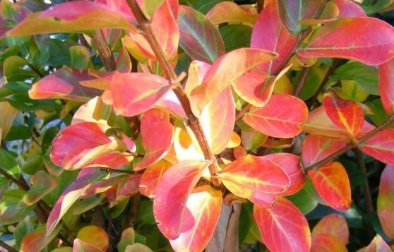 www.mesarbustes.fr