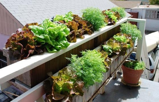 www.grow-it-organically.com
