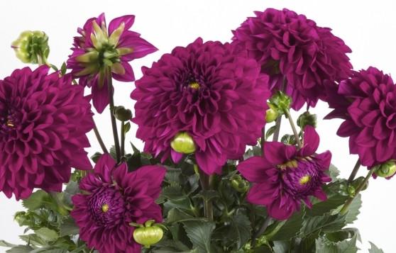 www.newplantsandflowers.com