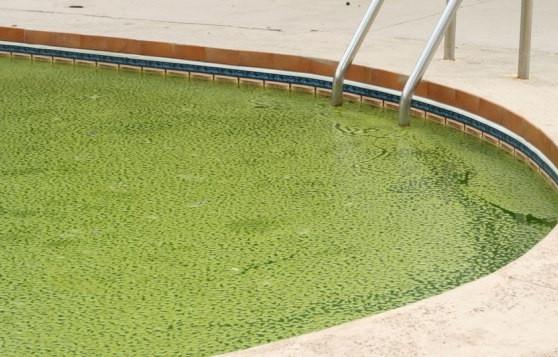 http://www.swimmingpool.com