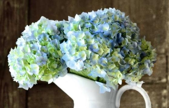 http://wohlundtoll.com/haus-garten/hortensien-pflege-lernen-sie-wie-sie-ihre-zimmerpflanzen-pfoegen.html