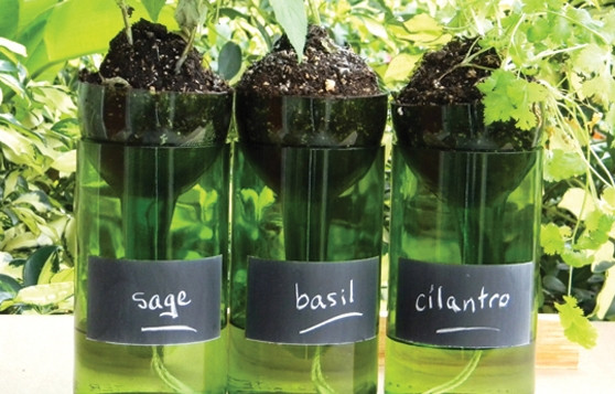 http://brandiaboo4s.loveitsomuch.com/stores/wine-bottle-planters-self-watering-with-chalkboard-1401799715,717747.html/174738