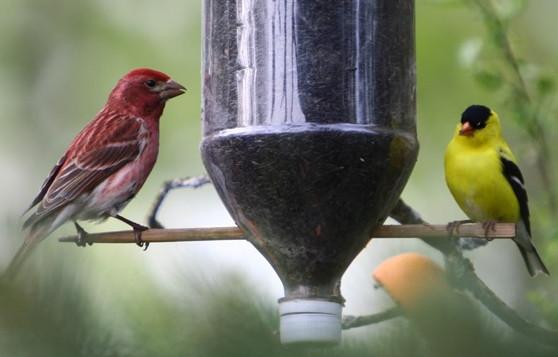 http://forums.gardenweb.com/discussions/1893899/homemade-bird-feeders
